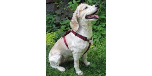 Harnais ajustable 1'' pour chien